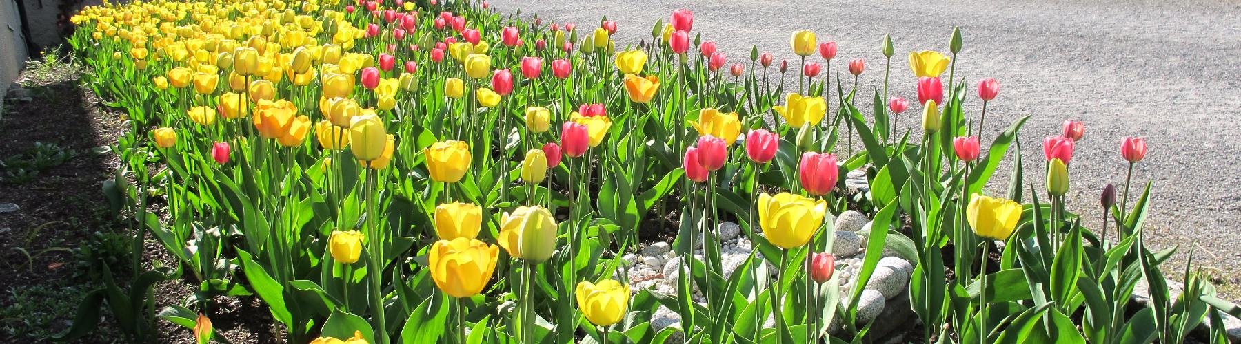 Vea-Statens fagkole for gartnere og blomsterdekoratører cover image