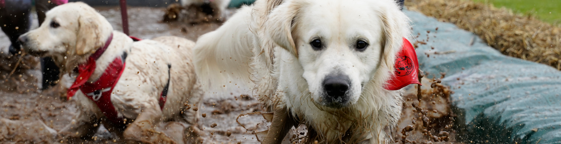 Muddy Dog 2019 cover image