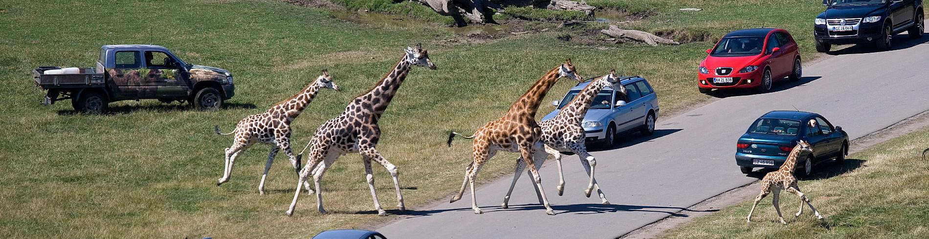 Knuthenborg Safaripark cover image