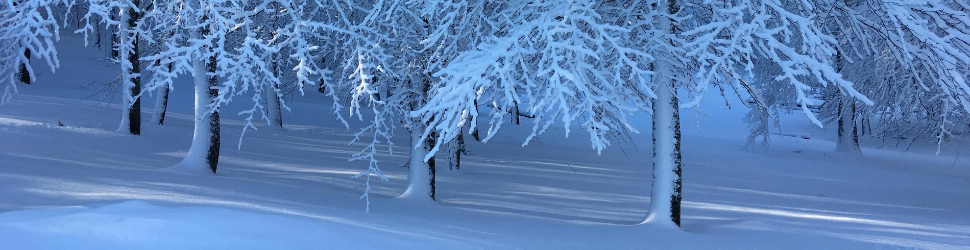 Bildebank Larvik kommune cover image
